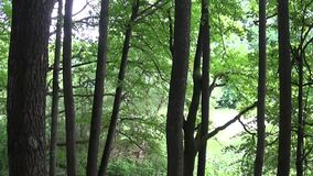 Horizontal panorama of a deciduous forest, the view of the valley from top to bottom. HD video footage with steadicam. Horizontal panorama of a deciduous forest stock video