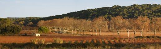 Horizontal panoramique des vignes Image libre de droits