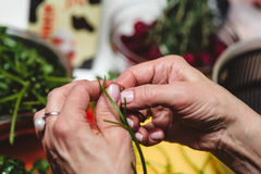 Horizontal photo of aged female hands with golden ring holding fresh green Arugula with vegetable table in background.  Royalty Free Stock Photos