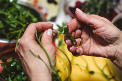 Horizontal photo of aged female hands with golden ring holding fresh green Arugula with vegetable table in background.  Stock Photo