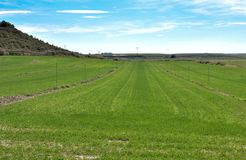 horizontal photo of an agriculture field with green crops and an irrigation watering system to water the grass to grow the wheat royalty free stock photo