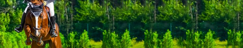Horizontal photo banner for website header design. Sorrel horse and rider in uniform during showjumping competition. Blur green trees and sun rays as background stock images