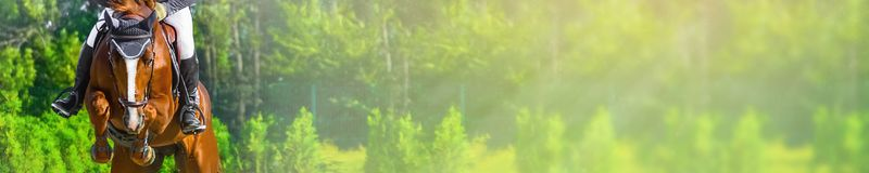 Horizontal photo banner for website header design. Sorrel horse and rider in uniform during showjumping competition. Blur green trees and sun rays as background Royalty Free Stock Images