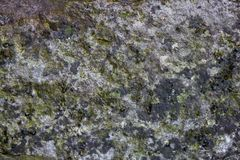 Gray mossy stone texture with little scratches. Horizontal photo image of a gray mossy stone texture with little scratches stock image