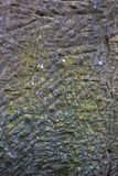 Gray stone texture with little scratches and yellow moss stock photo
