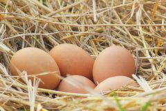 Horizontal photo of several hen eggs which are placed on nice haystack from dried straws and inside wicker basket. Light wooden wa Stock Image