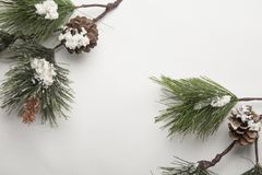 Winter Background with Pine Branches Royalty Free Stock Photo