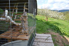Horizontal picture of prairie dog locked in a cage Royalty Free Stock Photos