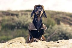 Horizontal portrait of a dog puppy, breed dachshund black and tan, in a cowboy costume sits on a stone against a background of g royalty free stock photos
