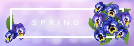 Horizontal banner with pansy flower for spring and summer. Horizontal purple banner with text frame with blue pansy flower and green leaf. Vector illustration Stock Images