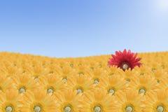 Horizontal rouge de fleur Images stock
