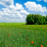Horizontal rural. Image stock