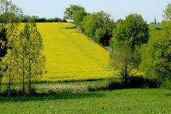 Horizontal rural au printemps image stock