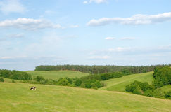 Horizontal rural avec la vache Images libres de droits