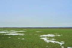 Horizontal rural Champ vert de bl? d'hiver avec des ruelles de neige Source en Ukraine images stock