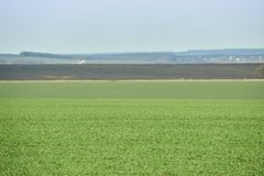 Horizontal rural Champ vert de bl? d'hiver avec des ruelles de neige Source en Ukraine photographie stock libre de droits