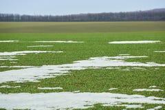 Horizontal rural Champ vert de bl? d'hiver avec des ruelles de neige Source en Ukraine image stock