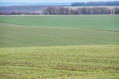 Horizontal rural Champ vert de bl? d'hiver avec des ruelles de neige Source en Ukraine image libre de droits