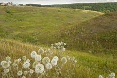 Horizontal rural d'été Photographie stock