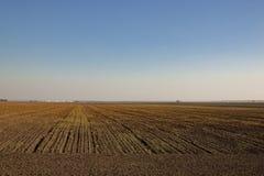 Horizontal rural d'automne Photo libre de droits