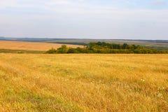 Horizontal rural d'automne Image libre de droits