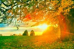 Horizontal rural d'automne photo stock