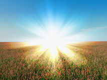 Horizontal rural de lumière du soleil images libres de droits