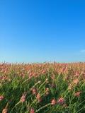 Horizontal rural de lumière du soleil image libre de droits