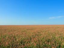 Horizontal rural de lumière du soleil photos libres de droits