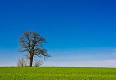 Horizontal rural de seul arbre images libres de droits