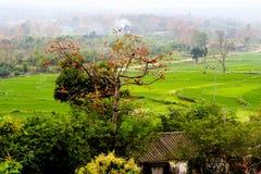 Horizontal rural de source Photographie stock