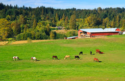 Horizontal rural, ferme de cheval, Cathcart Washington Photos libres de droits