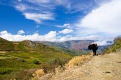 Horizontal rural sauvage sur la Corse Photos libres de droits