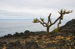 Horizontal sans vie d'île volcanique Photos libres de droits