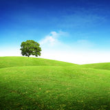 Horizontal scénique d'été Image libre de droits