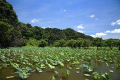 Horizontal scénique d'étang de lotus contre le ciel bleu Images stock