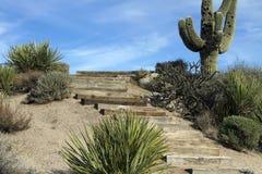 Horizontal scénique de cactus de Saguaro de désert de l'Arizona Images stock