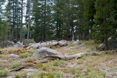 Horizontal scénique de forêt Image libre de droits