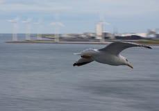 Horizontal seagull and wind turbine generators Stock Images