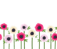 Horizontal seamless background with anemone flowers. Vector horizontal seamless background with pink, purple and white anemone flowers Stock Photos