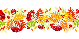 Horizontal seamless background with autumn rowan branches, leaves and berries. Vector illustration. Royalty Free Stock Images