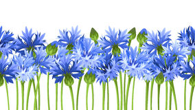Horizontal seamless background with blue cornflowers. Vector illustration. Stock Photo