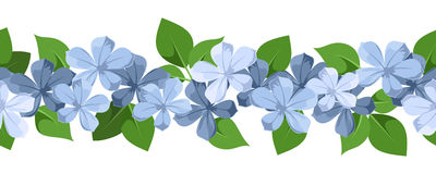 Horizontal seamless background with blue flowers.. Vector horizontal seamless background with blue plumbago flowers and green leaves on white Royalty Free Stock Photo