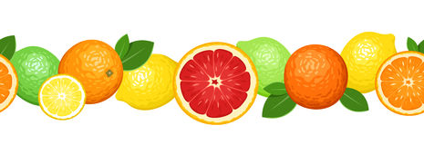 vector horizontal seamless background with citrus  Stock Photography