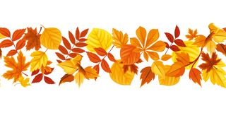 Horizontal seamless background with colorful autumn leaves. Vector illustration. royalty free illustration