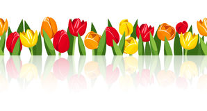 Horizontal seamless background with colorful tulips. Vector eps-10. Vector horizontal seamless background with red, orange and yellow tulip flowers Royalty Free Stock Image