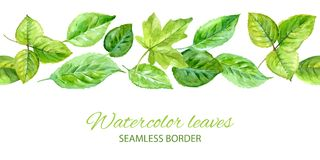 Horizontal seamless background with green leaves. watercolor vector Royalty Free Stock Photography