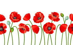 Horizontal seamless background with red poppies. Vector illustration. Stock Images