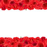 Horizontal seamless background with red roses. Vector illustration. Stock Photos