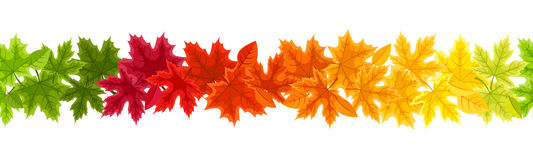 Horizontal Seamless Background With Autumn Colorful Maple Leaves. Vector Illustration. Stock Photography